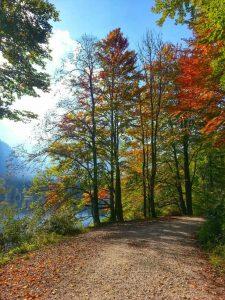Trees with Autumn colour in Austria